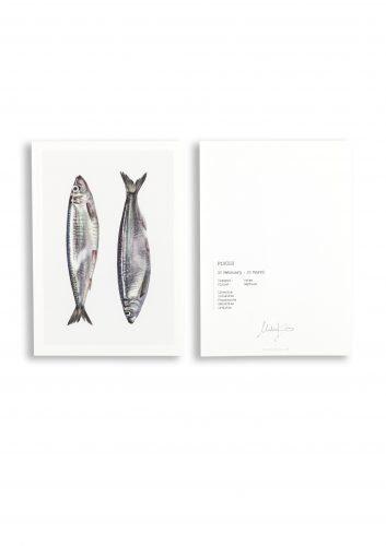 malou kalay sterrenbeeldkaart vissen