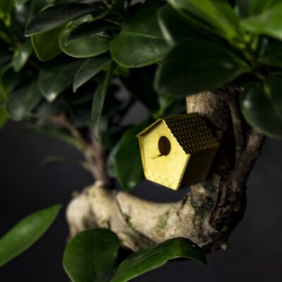 botanopia tiny birdhouse for house plants sprout tykky unieke cadeaus gift shop
